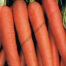 """Морковь сорт """"ФЛАККИ 2"""" (Flakkee 2)  6500 семян"""