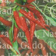 "Перец  сорт ""ХОТ ТАЙ КАРРИ"" (Hot Thai Curry)  35 семян"