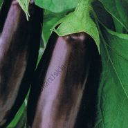 "Баклажан  сорт  ""ДЛИННЫЙ ФИОЛЕТОВЫЙ"" (lange violette)    0.50  гр.  135 семян"