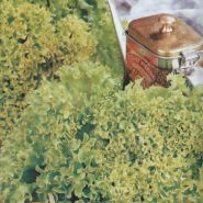 "Салат  сорт ""ЛОЛЛО БИОНДА"" (Lollo Bionda)  5 гр. семян"