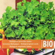 """Салат  сорт """"БИО ЧАША"""" (Bowl BIO)  5 гр. семян"""