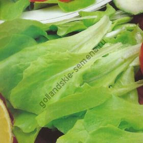 "Салат  сорт ""ВИТТЕ ДЮНСЕЛ"" (Witte Dunsel)  5 гр. семян"
