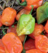 """Перец сорт """"ХАБАНЕРО ОРАНЖ"""" (Habanero oranje )  20 семян"""