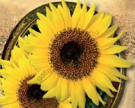 """Подсолнух сорт """"ЧОКО САН"""" (CHOCO SUN) 15 семян"""