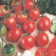 """Томат сорт """"ТИНИ ТИМ"""" (Tiny Tim) 450 семян"""