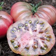 """Томат сорт""""ПУРПУРНЫЙ КАЛАБАШ БИО""""(Purple Calabash BIO) 20 семян"""