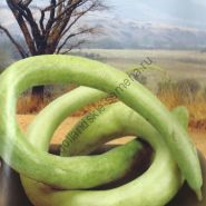 """Тыква сорт """"ИТАЛЬЯНСКАЯ ЗМЕЯ"""" (Italian Snake) 15 семян"""