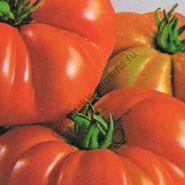 "Томат сорта ""КОСТОЛУТО ФИОРЕНТИНО""(Costoluto Fiorentino) 400 семян"